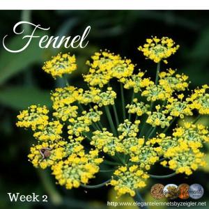 Fennel - little beads of sunshine