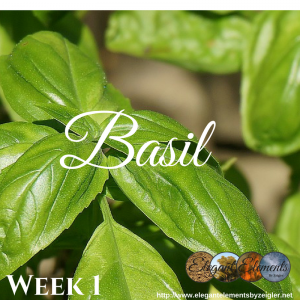 Basil is an amazing little herb