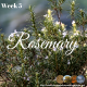 Rosemary – Amazing Reasons to Love it