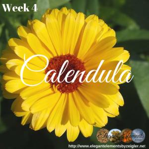 Calendula is a happy little plant!