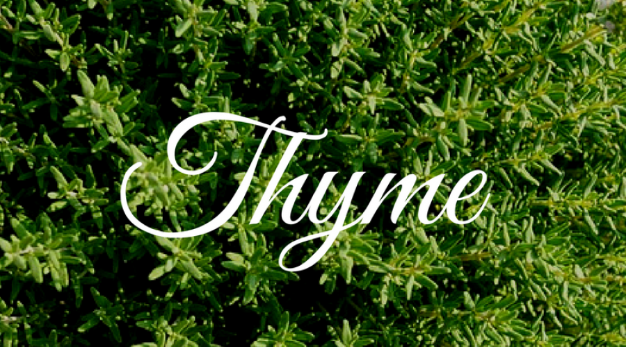 Thyme – Care About This Super Herb
